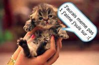 Nos amis ! les chats ! 4