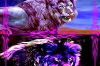 Lions et Tigres