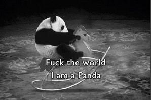 Fuck the world I'm a panda
