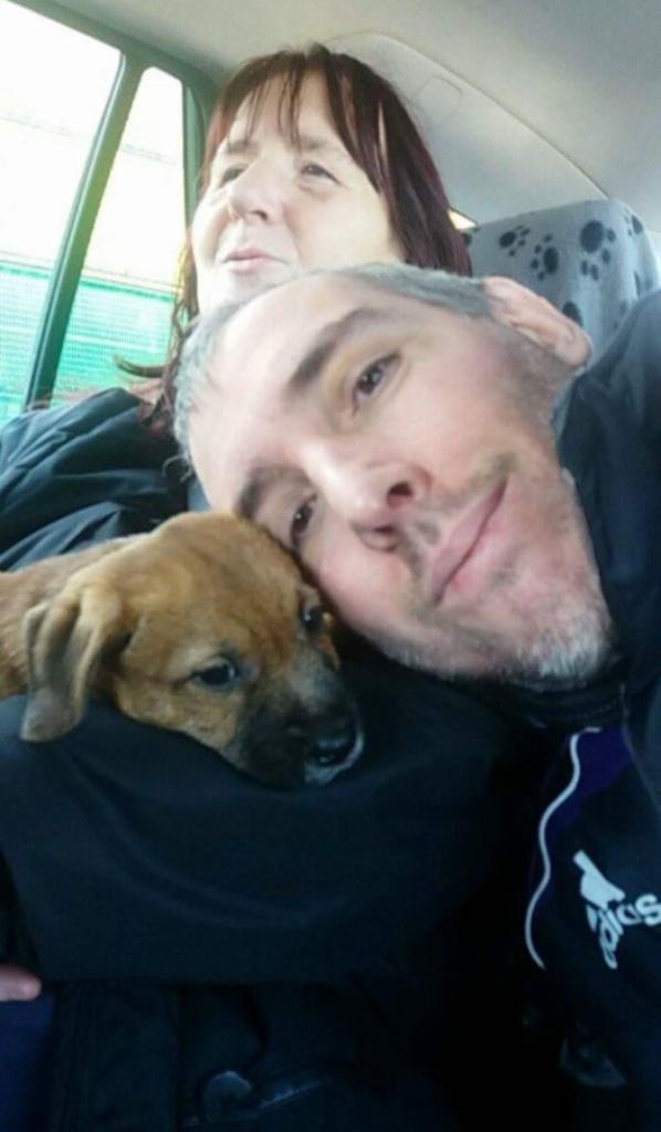 Chewbacca ... croisé Border Terrier, Jack Russel