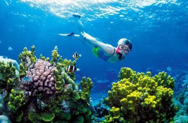 Plongée au milieu des coraux