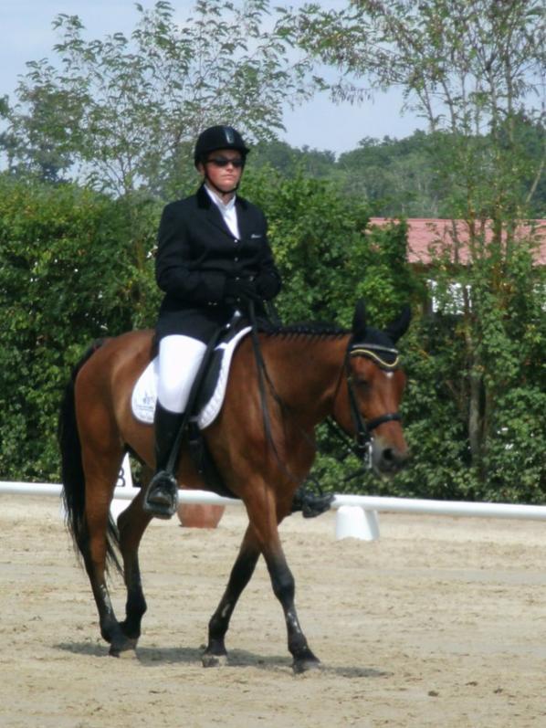 Concours SIF no 1380147 – Épreuve no 03 du 24/07/2013  Dressage Chp de France Club 1 J.Senior Excellence