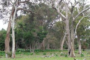 Mardi 1er août 2017 :Perth -Margaret River (305 kms); (photos la suite )