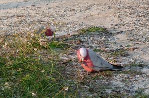 Jeudi 5 octobre 2017 ; Rottnest Island ;photos la suite N°4