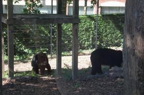 zoo Maubeuge