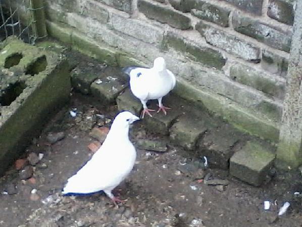mon couple de blanc