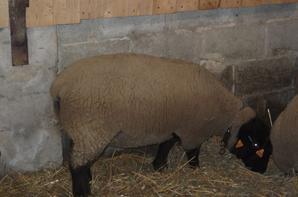 Début décembre 2012 - agnelles