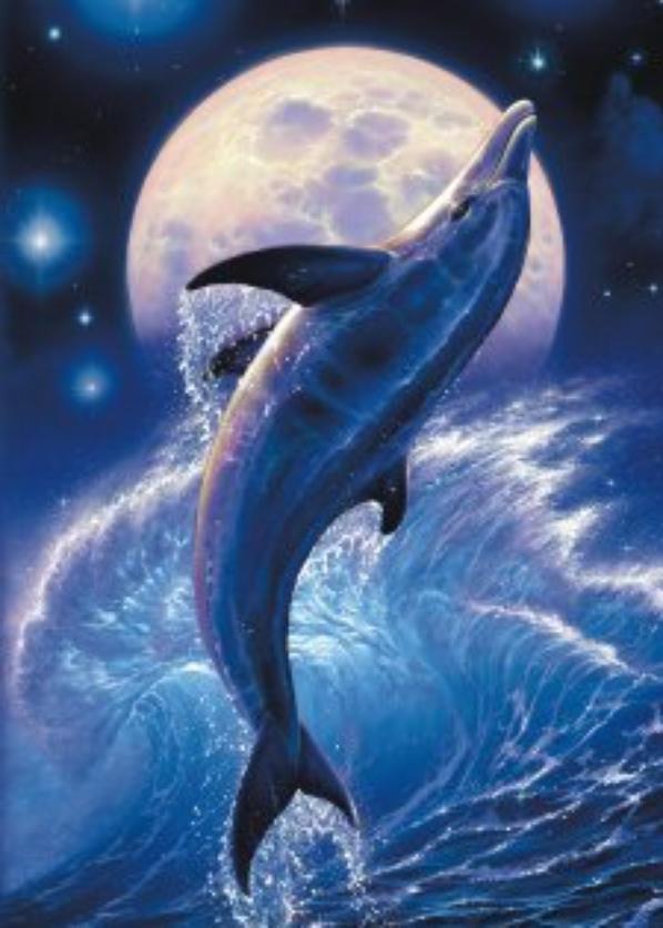 dauphin met des comme