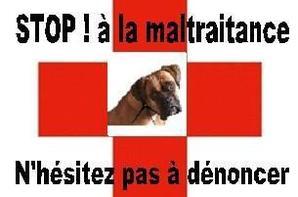 STOP à LA MALTRAITANCE !!!