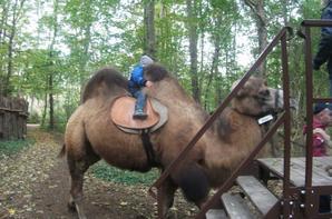 Tour de chameau