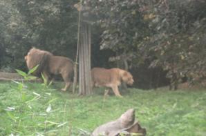 Suite Zoo de Leipzig