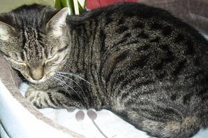 """Les chatons sont là pour apprendre aux humains à s'adapter aux besoins du chat. En récompense, ils nous attribuent le titre de """"chat honorifique""""."""