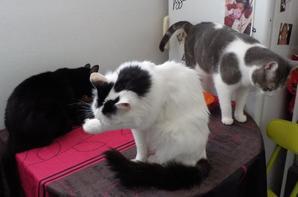 Mooky, le chatasstrophe, et, il n'en loupe pas une! et ses compagnons poilus!