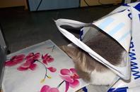 Hubert et son sac en plastique, testé et approuvé!