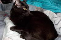 Merlin, le petit gabarit de la maison, mon petit pot de colle introverti!