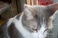 Hubert, mon chatmoureux, ma tendresse et mon protecteur de mon repos....