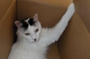 Mooky, et son carton, à peine l'aspirateur déballé, qu'il fût vite réinvesti par Mooky....