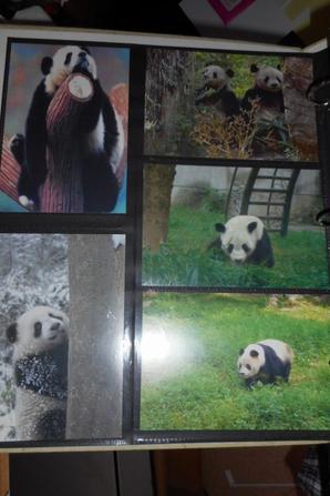 Panda 24 Carte postale Chine + une de WWF