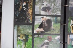 Panda Série de 20 Cartes postales China