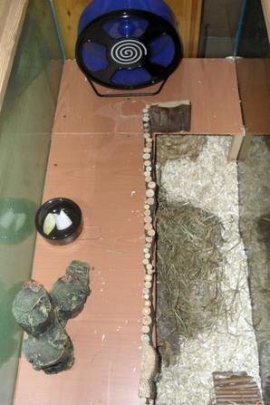 Idée d'habitat et infos pour hamster nain