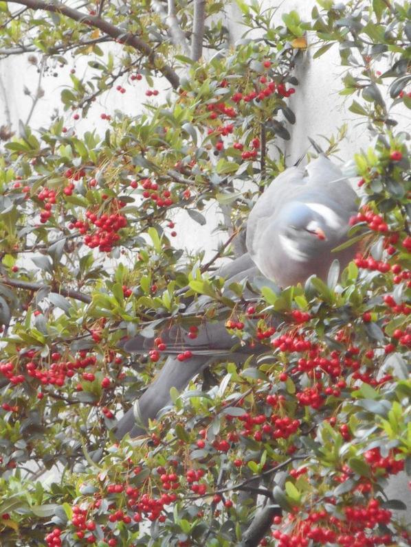 Pas de poupée, mais deux gros pigeons gourmands pour vous souhaiter un bon lundi !!!