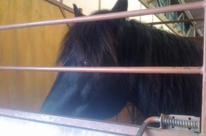 Les chevaux du salon (enfin quelques-un !)