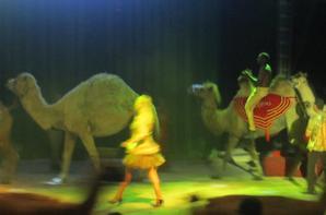 reportage cirque Medrano a Niort 15