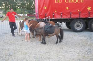 reportage cirque Medrano a Niort 21