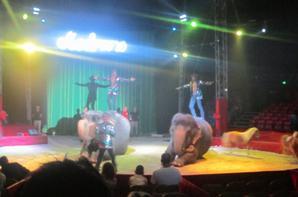 reportage cirque Medrano a Niort 24