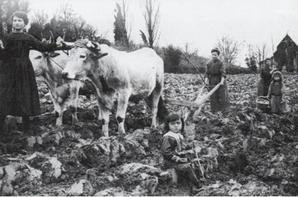 Les enfants victimes de la grande guerre