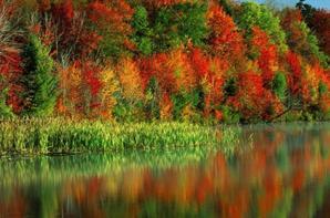 la beauté et la nature