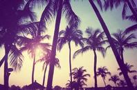 Programme de mes vacances d'été 2015