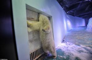 L'OURS PiZZA !!! :'( Le nouvel ours le plus triste du monde !