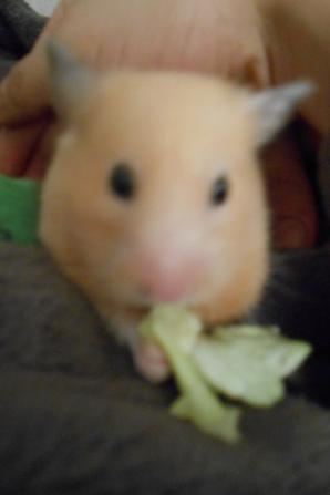 Trop bon la salade !