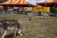 Le Zoo-Pinder à Carnac les 4 et 5 août 2014 :