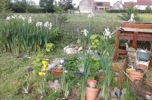 Un peu de jardinage ???