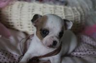 Mon petit panda  Iago <3