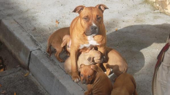 maman et ses chiots