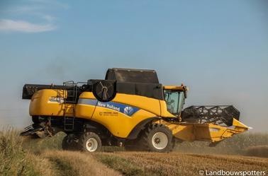 Tarwe dorsen met New Holland CX 8040