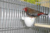 voici les oiseaux de ma maison