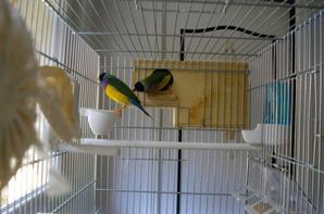quelques photos des oiseaux dans ma maison