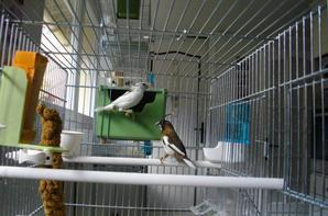 suite de mes oiseaux