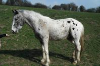suite des chevaux confiés aux crep de 1990 à nos jours