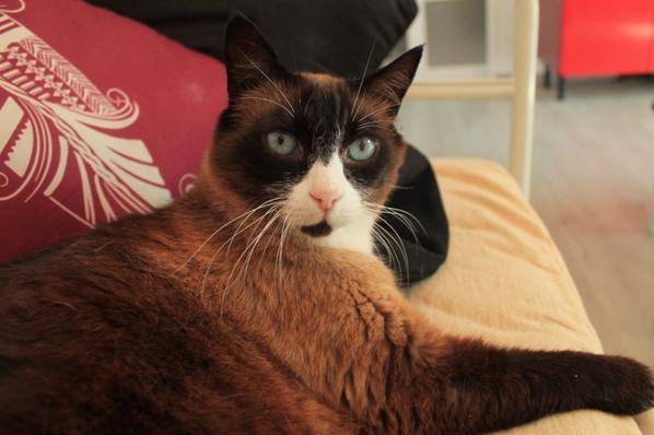 mon chat Titi