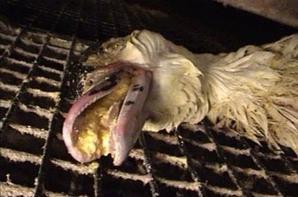 Le foi gras, un délice !