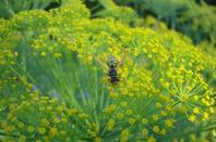fleurs du jardin  en ce mois d'août
