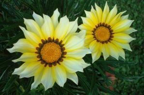 d'autres fleurs....