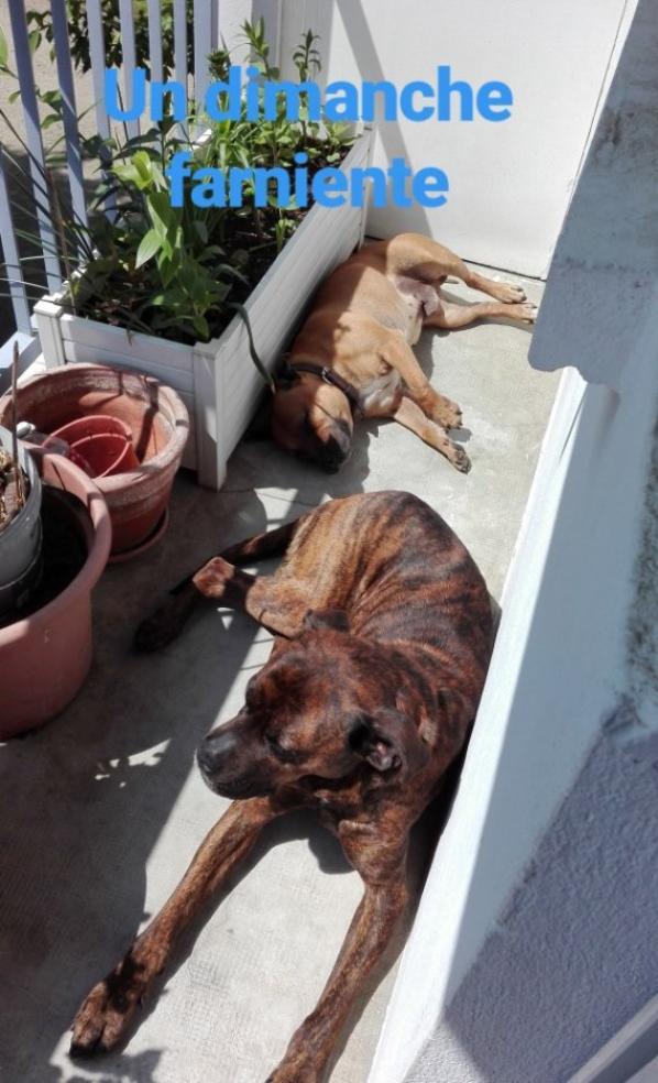 les dernières photos de Balu avec Kasko