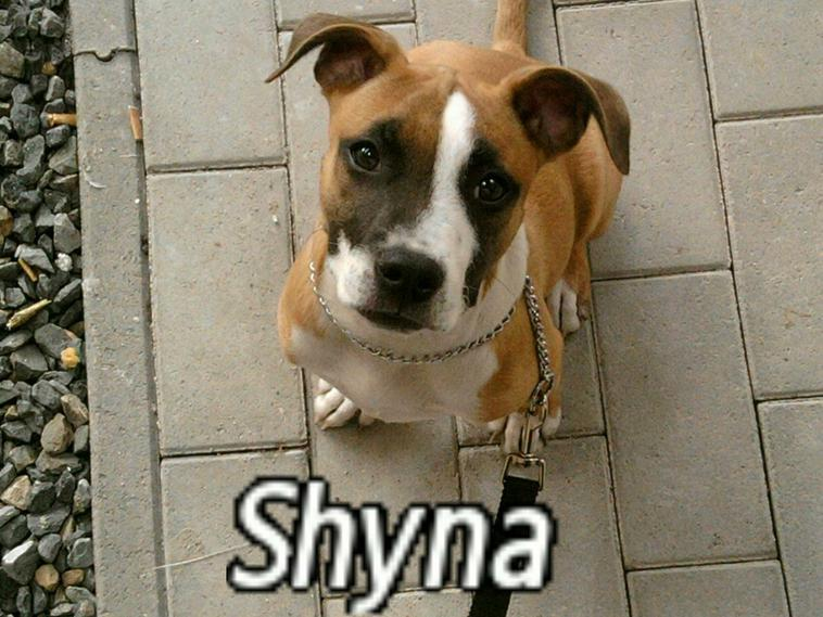 Shyna, notre femelle