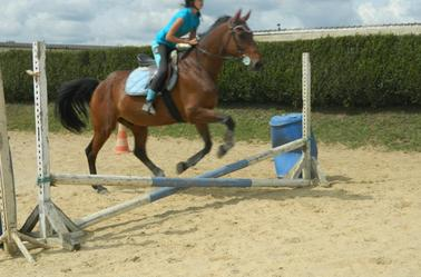 << Passé un obstacle avec son cheval , c'est touché le bonheur du bout des doigts.. <<